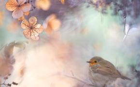 Picture leaves, branches, nature, collage, bird, Robin, Robin, Flycatcher, Robin, repalov