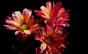 Picture flowers, nature, background, color
