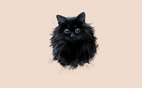 Picture cat, eyes, black