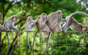 Picture monkey, family, fun
