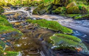 Picture nature, Autumn, Stream