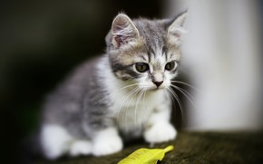 Picture cute, kitty, background