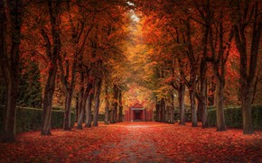 Picture alley, falling leaves, mansion, autumn trees