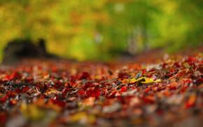 Picture fallen leaves, on earth, blur bokeh