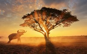 Picture the sun, light, tree, elephant, morning, haze, rider