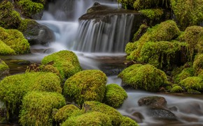 Picture greens, nature, stones, waterfall