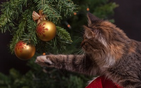 Picture cat, balls, paw, tree, Christmas decorations, tabby cat