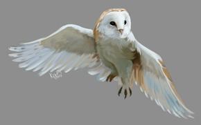 Picture owl, bird, art, flight