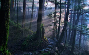 Picture forest, moss, the rays of the sun, path