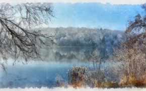Picture water, lake, branches, the bushes, winter