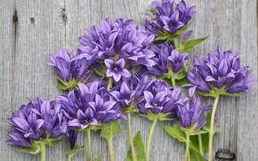 Picture flowers, bouquet, Purple, wood