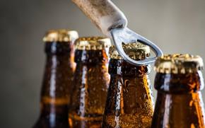 Picture metal, glass, beer, bottles, bottle opener