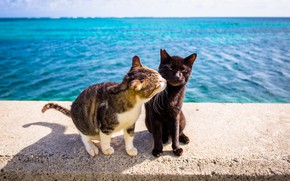 Picture sea, cats, pair
