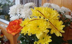 Picture mood, chrysanthemum, autumn flowers