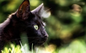 Picture eyes, cat, look, background