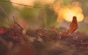 Picture autumn, macro, foliage