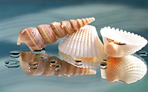 Picture drops, macro, reflection, background, shell