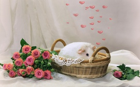 Picture heart, roses, Guinea pig, basket