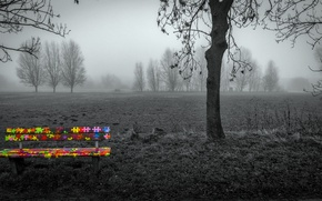 Picture field, fog, bench