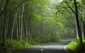 Picture road, forest, turn