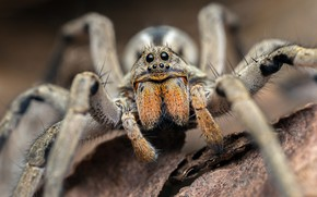 Picture macro, background, spider