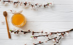 Picture Flowers, Spring, Branches, Honey