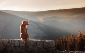 Picture wall, forest, Dog, photography, trees, landscape, nature, photo, sunset, tail, hills, animal, stones, sunlight, ears, …