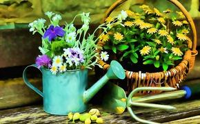 Picture Flowers, Flowers, Art, Basket, Figure, Still Life, Art