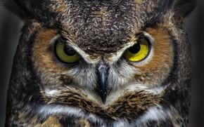 Picture eyes, bird, beak, virgin Filin
