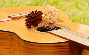 Wallpaper Musical Instrument, Guitar, Music, flowers