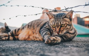 Picture cat, lies, barbed wire