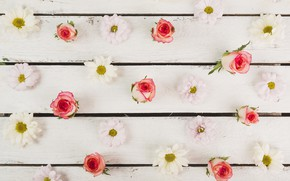 Picture flowers, Roses, chrysanthemum