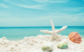 Wallpaper sand, sea, beach, star, shell, summer, beach, sea, blue, sand, starfish, seashells