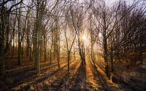 Picture forest, light, trees, nature