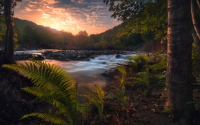 Picture water, trees, sunset, fern