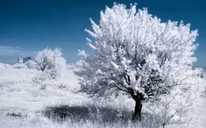 Picture leaves, tree, France, Provence, infrared the