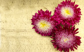 Picture flowers, flowers, asters, asters