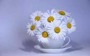Wallpaper bouquet, chamomile, flowers