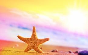 Picture sand, blur, Morska Zvezda