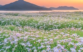 Wallpaper nature, mountains, field, flowers