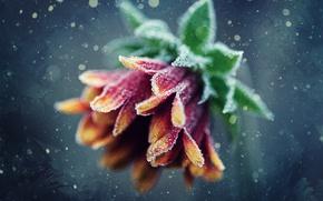 Wallpaper patterns, flower, bokeh, frost, frost