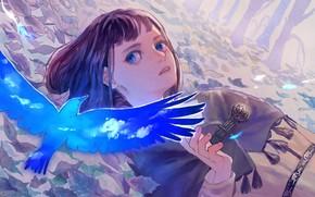Picture look, bird, girl