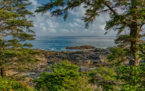 Picture sea, the sky, clouds, trees, branches, stones, shore, horizon, Canada, British Columbia, the bushes, Ucluelet