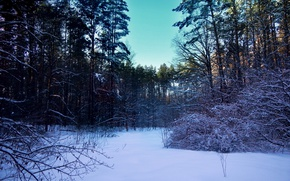 Picture winter, forest, snow, trees, landscape, nature, glade, the bushes, winter forest
