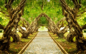 Wallpaper landscape, nature, plumeria, alley, trail, tree, trees, exotic, forest, Park, park