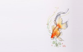 Wallpaper algae, figure, fish, art, goldfish