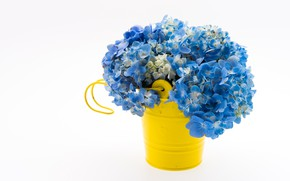 Picture blue, flower, bouquet, Hydrangea