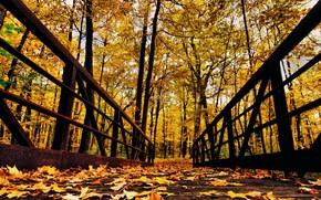 Picture autumn, forest, leaves, trees, Park, railings, the bridge