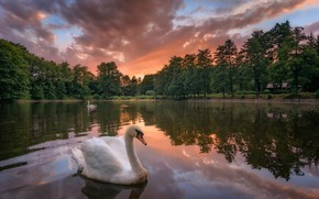 Wallpaper sunset, trees, swans, reflection, lake, birds