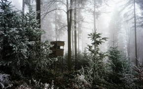 Picture winter, forest, fog, tower